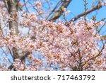 pink sakura flower close up ... | Shutterstock . vector #717463792
