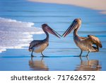 Pelicans Divide The Fish. Two...