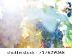 grapes in a vineyard  selective ... | Shutterstock . vector #717629068