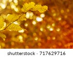 colorful autumnal background... | Shutterstock . vector #717629716