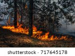 Fire. Wildfire  Burning Pine...