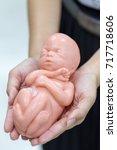 embryo model  fetus for... | Shutterstock . vector #717718606