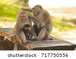 two quiet sitting monkeys... | Shutterstock . vector #717750556