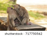two monkeys sitting and taking... | Shutterstock . vector #717750562