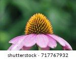 close up pollens flower. | Shutterstock . vector #717767932
