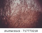flowering branches of pussy... | Shutterstock . vector #717773218