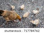 mother hen and baby chicks... | Shutterstock . vector #717784762