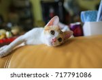 lazy small cat on the sofa | Shutterstock . vector #717791086