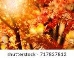 Glistening Autumn Trees. Orang...