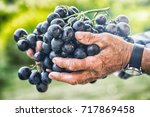 black or blue bunch grapes in...
