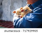 Stock photo adult man farmer holding two newborn pigs 717929905