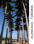 Palm Trees Boulevard - stock photo