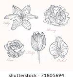 set of flowers | Shutterstock .eps vector #71805694