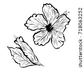 hibiscus flower in tattoo style.... | Shutterstock .eps vector #718063252