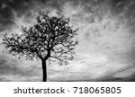 Silhouette Dead Tree  On Dark...