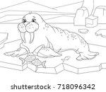 the walrus flippered marine... | Shutterstock .eps vector #718096342