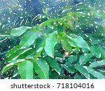 green leaves concept   abstract ...   Shutterstock . vector #718104016