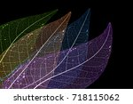 dry leaf detail texture   Shutterstock . vector #718115062