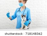 Stock photo crop of female veterinarian in hospital holding by hands caring doing injection by little husky 718148362