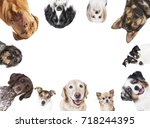 Many Different Dog Breeds...