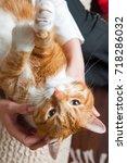 big funny red cat on hands... | Shutterstock . vector #718286032