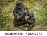 bored mama gorilla with baby ... | Shutterstock . vector #718342372