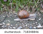 Small photo of snail creeps along the ground with green grass