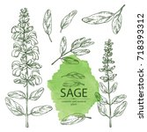 collection of sage  branch of... | Shutterstock .eps vector #718393312