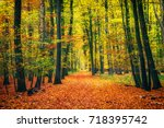 pathway in the autumn forest | Shutterstock . vector #718395742