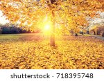 colorful foliage in the sunny... | Shutterstock . vector #718395748