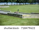 Small photo of Canada goose walking across bocce court. Green grass and blue lake behind. Puns game fowl foul.
