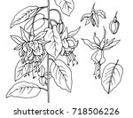 vector drawing plants flowers | Shutterstock .eps vector #718506226