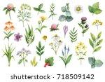 hand drawn watercolor set green ... | Shutterstock . vector #718509142