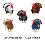 turkey breeds. vector...   Shutterstock .eps vector #718549555