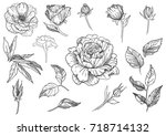 graphic set of flowers  leaves... | Shutterstock .eps vector #718714132