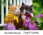 Stock photo black and red kitten are sitting in a basket with flowers 718771996
