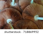 The Underside Of A Large...