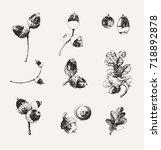 set of hand drawn acorns... | Shutterstock .eps vector #718892878