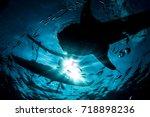 whale shark silhouette | Shutterstock . vector #718898236