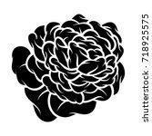flower rose  black and white.... | Shutterstock .eps vector #718925575