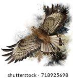 Falcon In Flight Watercolor...