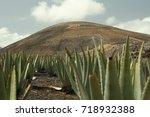 Aloe Vera Plants  Eco Farm  On...
