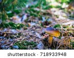 mushroom in the forest | Shutterstock . vector #718933948