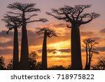 beautiful baobab trees at... | Shutterstock . vector #718975822