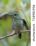 Small photo of Hummingbird(Trochilidae)Flying gems