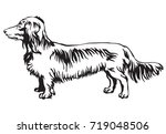 Stock vector decorative contour portrait of standing in profile long haired dachshund dog vector isolated 719048506