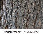 Bark Of The Tree Large Deep...