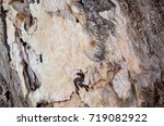 wood with termites texture | Shutterstock . vector #719082922