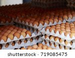 eggs  | Shutterstock . vector #719085475