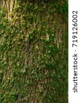 moss texture on tree   Shutterstock . vector #719126002